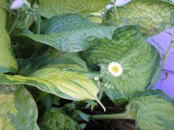 flowery run 018